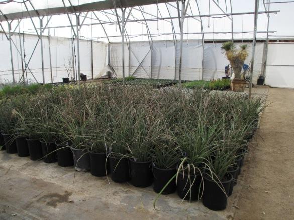 DionsSV-PlantTag05Sml