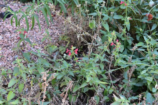 Robertson Res-Rad Plants1_2019-10-30-SML